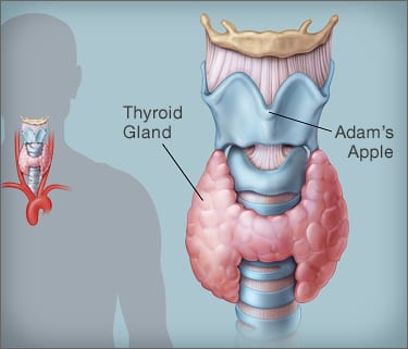 improving thyroid function