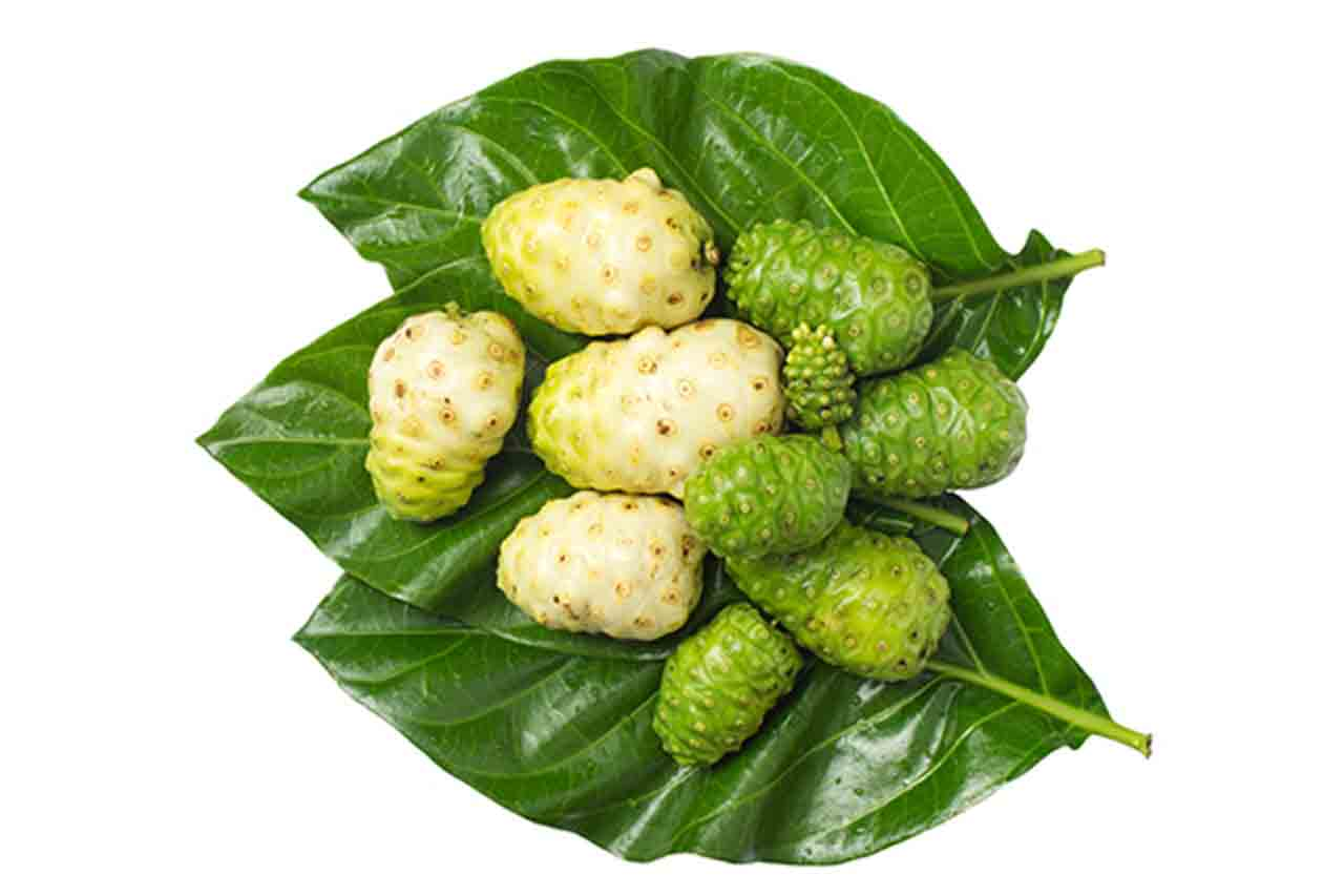 What is Noni Fruit? | 1 Powerful, Great Health Promoting Fruit