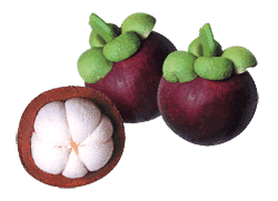 Mangosteen Information and Health Benefits